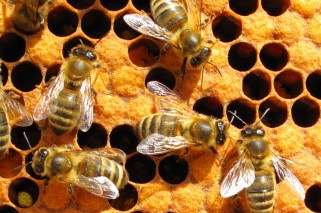 bees_5
